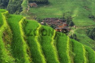 Longi rice terrace