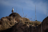 Stork in Meknes - one of the four Imperial cities of Morocco