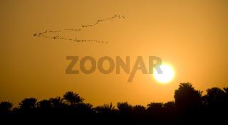 Vögel im Sonnenuntergang birds sunset