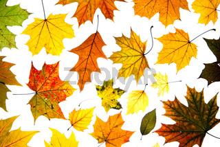 viele Herbstblätter