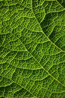 Green leaf, macro photo