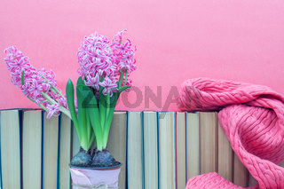 Pink hyacinths in pot infront of pile of books at pink background. Beautiful spring pink background. Copy space.