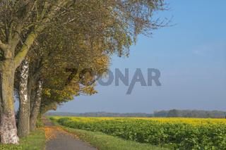 Fahrradweg im Münsterland