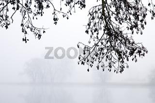 Schwarz-Erle mit Nebel_03.tif