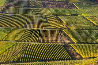 Weinberge bei Mayschoß, Rotweinwanderweg, Ahrtal