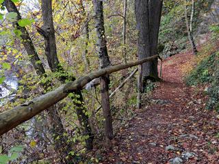 Forest trail in autumn, Swabian jura, Germany