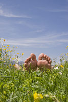 relaxen in the flower meadow