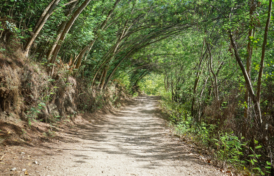 Pilgrim trail, Camino de Santiago, Spain