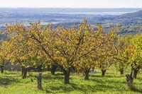 autumn in the Monti Lessini
