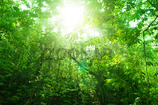 Tropical green forest view