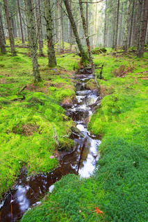 Small stream flowing through moss in the forest