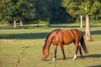 Horse grazing on field over grass