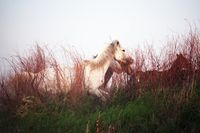 White horse on the grass at sunset