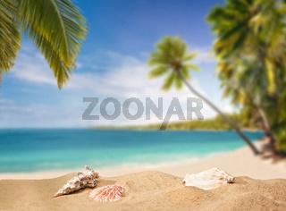 Tropischer Strand mit Palmen und Muscheln