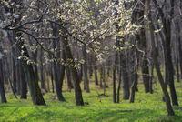 Closeup spring blossoming tree brunch