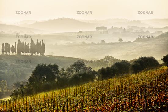 Chianti vineyards, Tuscany, Italy