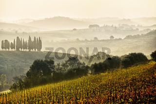 Weinlandschaft des Chianti, Toskana, Italien