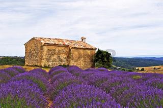 Kapelle im Lavendelfeld, Entrevennes, Provence