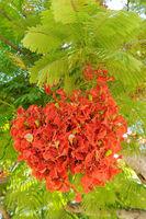 Israel Flowers