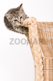 Kätzchen klettert auf einem Korbsessel - kitty climbs on a basket-chair