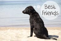 Dog At Sandy Beach, Text Best Friends