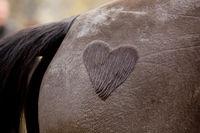 heart on a horses backside
