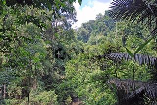 Khao Sok National Park, Thailand, Asien / Khao Sok National park, Thailand, Asia