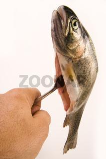 Forelle auf einer Gabel - trout an a fork