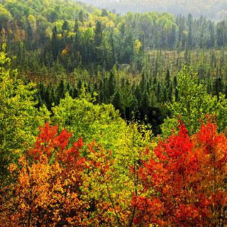 Fall forest rain storm