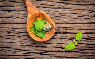 Fresh lemon balm leaves in spoon setup with flat lay on shabby wooden table. Melissa tincture in glass bottle with fresh leaves and copy space.