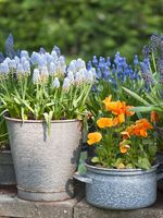 spring flowers in pot