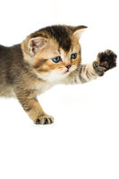 Kleines Kätzchen