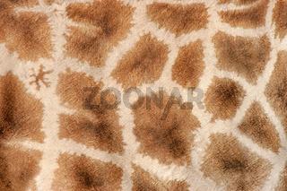 Giraffe skin