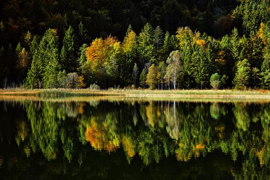 Lake Swan, Schwansee, Upper Bavaria, Germany