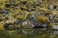 Iceland, moss-covered boulders in Asbyrgi canyon