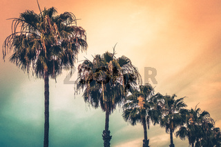 Tropical palmtrees in Canaries