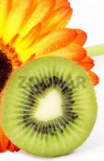 A Kiwi Slice and Daisy, Summer Splendor