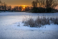 Lake frozen with reeds at sunset