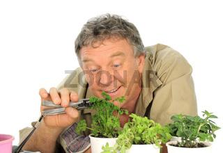 Parsley Gardener