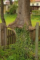 tree loops around metal bar