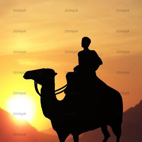 man on camel
