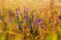 Flowers meadow