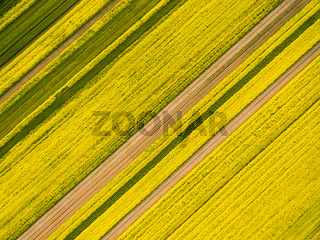 aerial view of rapeseed flower field in spring