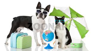 Hund und Katze im Urlaub