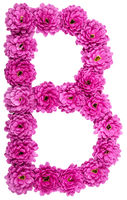 Letter B, alphabet from flowers of chrysanthemum, isolated on white background