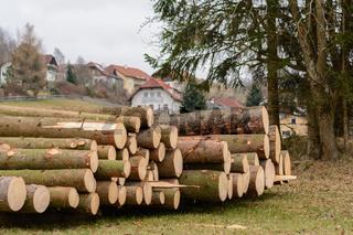 geschlägerte Fichtenbäume auf einen Stapel zum Abtransport bereit