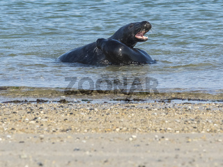Spielen im Wasser 3
