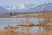Riegsee - Moor lake in the foothills of the Alps