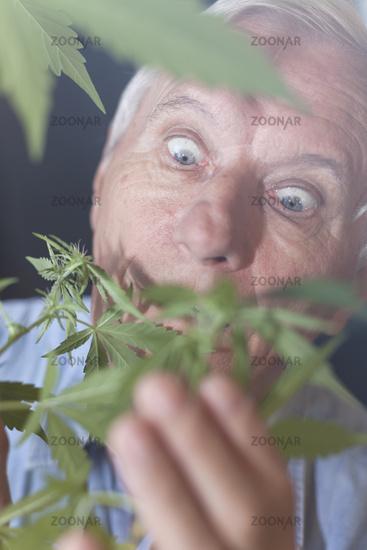 Surprised senior man with Cannabis plant