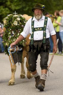 Almabtrieb und Alpabtrieb mit Kühen in Nesselwang, Bayern